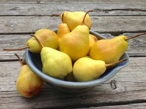 Pears in Blue Bowl