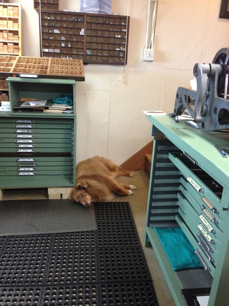 "Mira, the Shop Dog, says, ""Wake me when it's time for a break."""