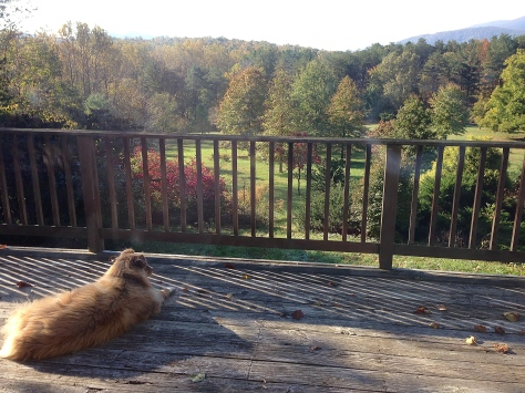 Mira, the St Brigid Press shop dog, overlooking autumn in the Blue Ridge Mountains.