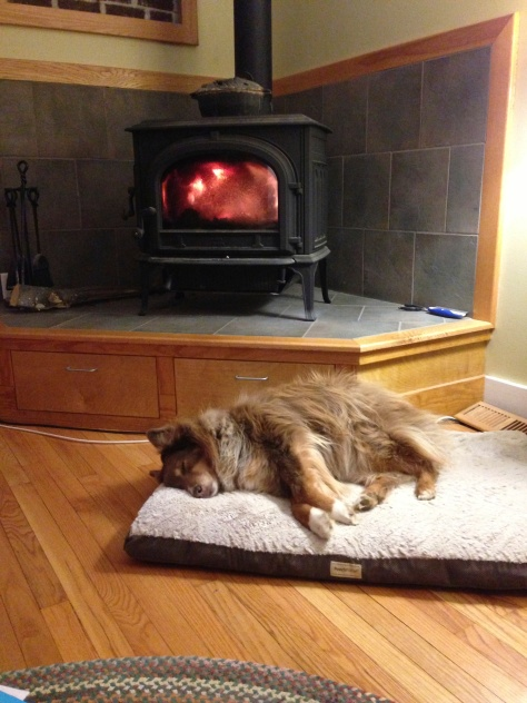 "Mira, the Shop Dog, says, ""Keep warm and get plenty of rest this Season!"""